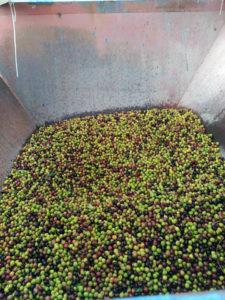 Trémie aux olives